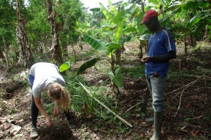 Trees for the Future Establishes 5000 capacity Moringa plantations in SW Cameroon
