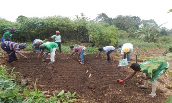 Mulching, Panacea For Low Farm Yield & Soil Infertility