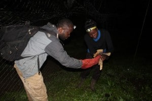 ERuDeF, CAMHERP-CBF Conduct Biodiversity Inventory At Mt Muanenguba
