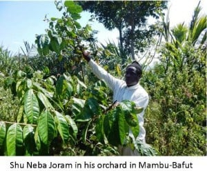 Agroforestry Fruits of Success