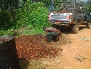 SBC Ltd Adopts New Palm Oil Production Model As 2017/2018 Milling Season Approaches