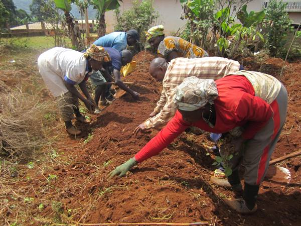 3.5 million Leguminous Tree Seeds for Cameroon's Farmers' Fields