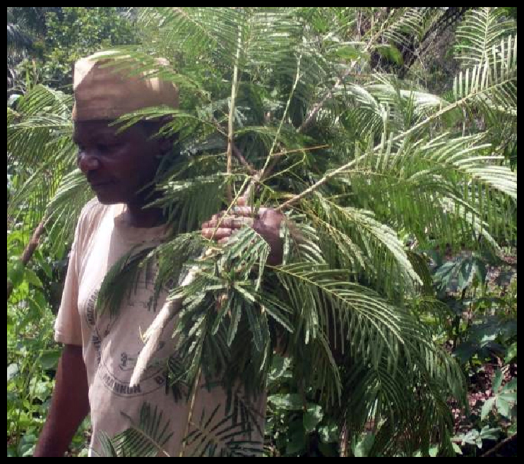 North West farmers use agric. diversification to boost incomes