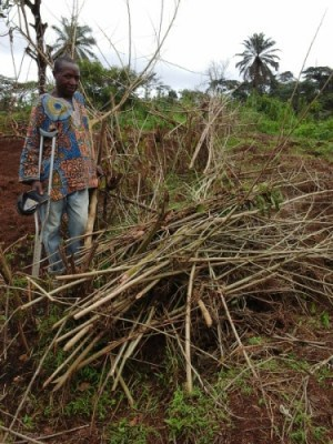Agroforestry Technologies, Improving Farm Yields In NW Cameroon