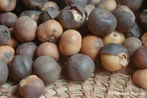ERuDeF enhances the conservation of Afrostyrax lepidophyllus