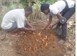 Communities learn how to propagate threatened tree species