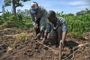 Increase Household Food Security And Poverty Alleviation Through Sustainable Agriculture Management In Western Cameroon