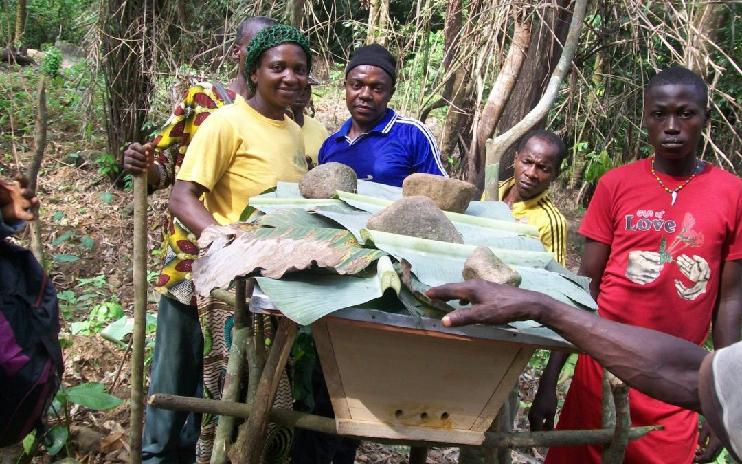 Nkongho-Mbeng & Alou-Tofala Farmers Reap from Biodiversity Community Trust