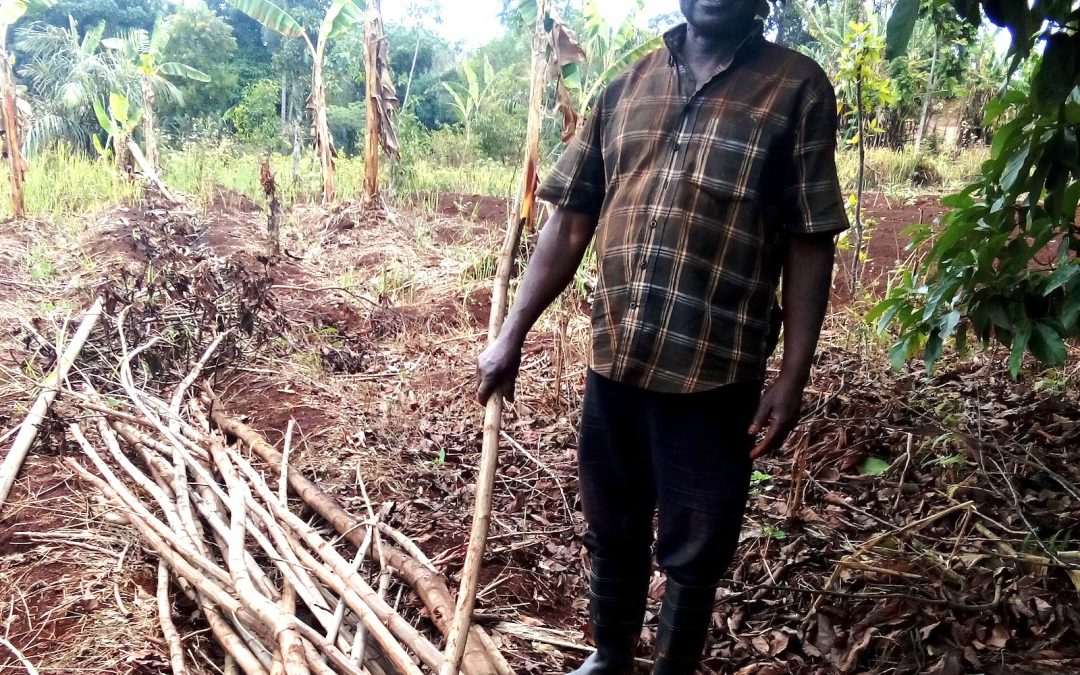 Mbu Thomas Testifies of the Goodness of Agroforestry System