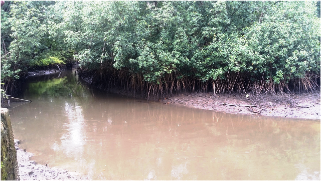 UNEP, Partners Wage War Against Bakassi Mangrove Depletion