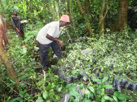 Extension of Threatened Trees project to other Cameroon Mountains eminent